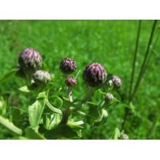IMG_0542_Field_flowers