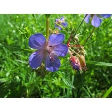 IMG_0547_Field_flowers