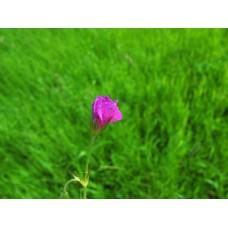 IMG_0580_Field_flowers