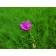 IMG_0581_Field_flowers