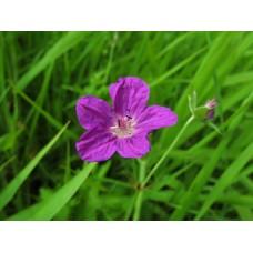 IMG_0582_Field_flowers