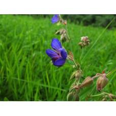 IMG_0586_Field_flowers