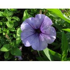 IMG_0671_Field_flowers