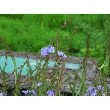 IMG_0858_Field_flowers
