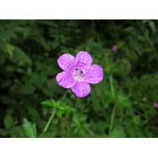 IMG_1661_Field_flowers