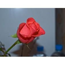 P5131357_Roses