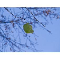 PA040245_Autumn_leaves