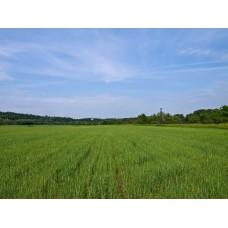 P7010065_Landscape