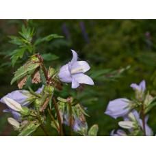 P7070333_Field_flowers