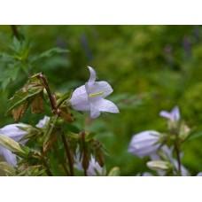 P7070334_Field_flowers
