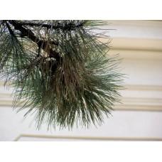 P6142760_Trees