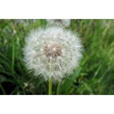 P1000407_Field_flowers