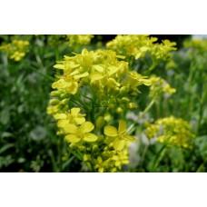 P1000409_Field_flowers