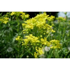 P1000410_Field_flowers