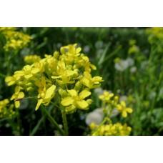 P1000411_Field_flowers