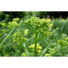 P1000412_Field_flowers