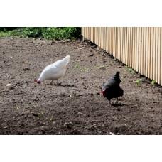 P1000431_Birds