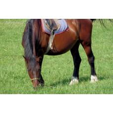 P1000490_Horses