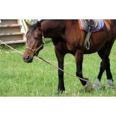 P1000491_Horses