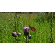 P1050435_Butterflies