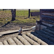 IMGP1182_Birds