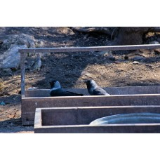 IMGP1274_Birds
