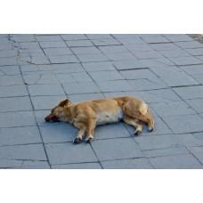 IMGP1389_Dogs