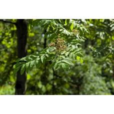 IMGP4935_Leaves