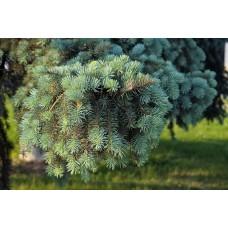 IMGP5099_Trees