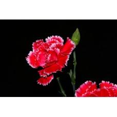 IMGP0760_Flowers