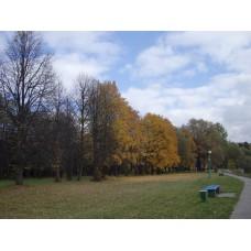 IMGP3919_Autumn
