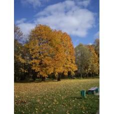 IMGP3925_Autumn