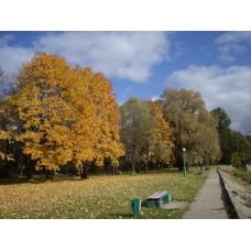 IMGP3926_Autumn