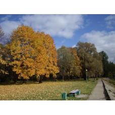IMGP3927_Autumn