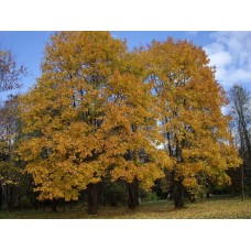 IMGP3928_Autumn