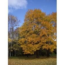 IMGP3929_Autumn