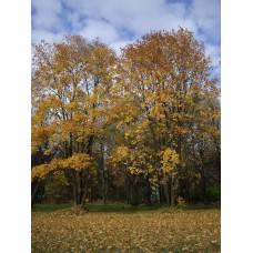 IMGP3930_Autumn