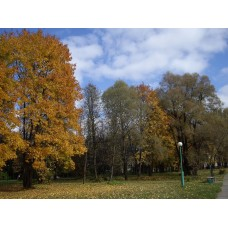 IMGP3931_Autumn