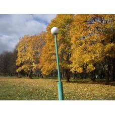 IMGP3932_Autumn