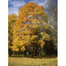 IMGP3933_Autumn