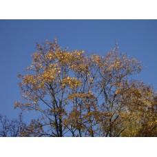 IMGP4064_Autumn_leaves