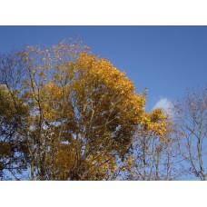 IMGP4068_Autumn_leaves