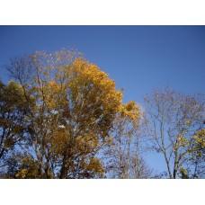 IMGP4069_Autumn_leaves