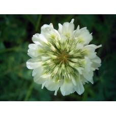 R0013061_Field_flowers