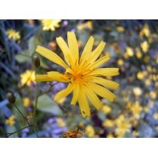 R0013327_Field_flowers