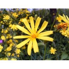 R0013329_Field_flowers
