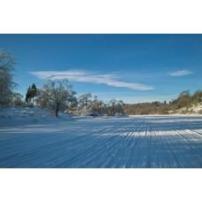 SDIM0364_Winter