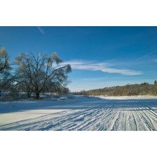 SDIM0368_Winter