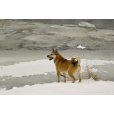 IMG02247_Dogs
