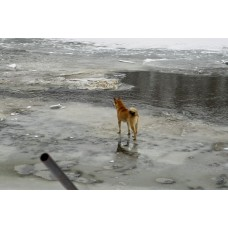 IMG02249_Dogs